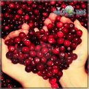 Клюква / Cranberry -  ароматизатор для самозамеса. HC