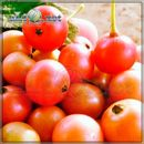 Kerson Fruit - ароматизатор для самозамеса. HC flavour