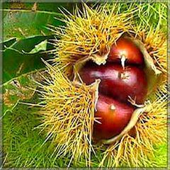 Каштан (chestnut, eliq.net) - жидкость для заправки электронных сигарет