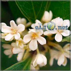 Sweet Osmanthus / Османтус (eliq.net)