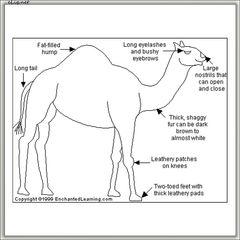 Camel Кемел (eliq.net) - жидкость для заправки электронных сигарет