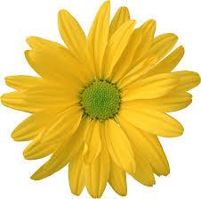 с цветочками