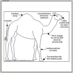 Camel/Desert Ship (Кэмел) табачный ароматизатор Healthcabin